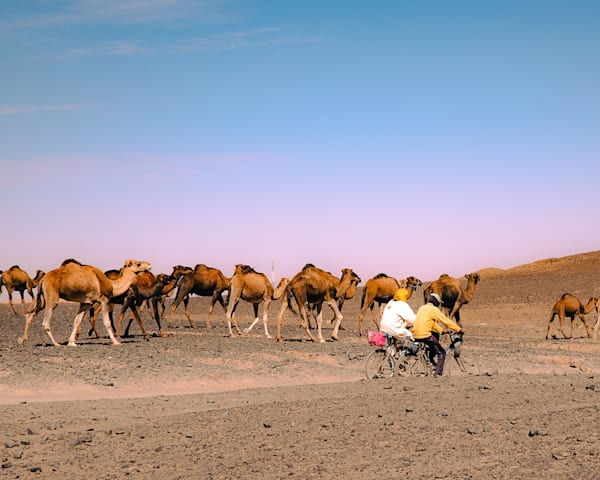 Camels Art | Cincy Artwork