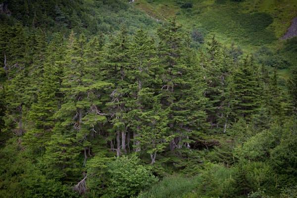 Fairytale Forest Photography Art | Leiken Photography