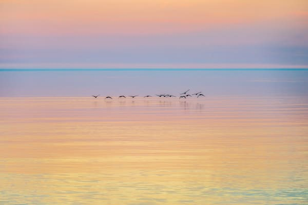 Canada Geese At Dawn Photography Art   Ted Glasoe, Artist