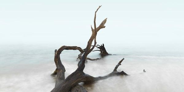 Reclaimed Photography Art | DE LA Gallery