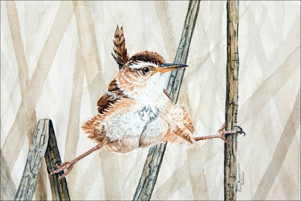 Splits (Marsh Wren) Photography Art | Drew Smith Photography, LLC