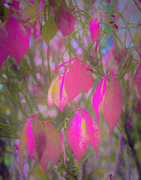Autumn Leaves Art | Cincy Artwork