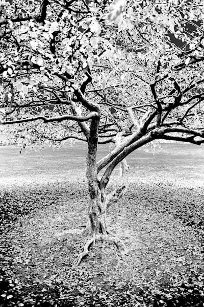Inverted Tree Art | Cincy Artwork