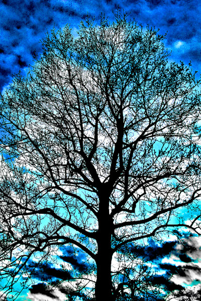 Tree With Blue Sky Art | Cincy Artwork