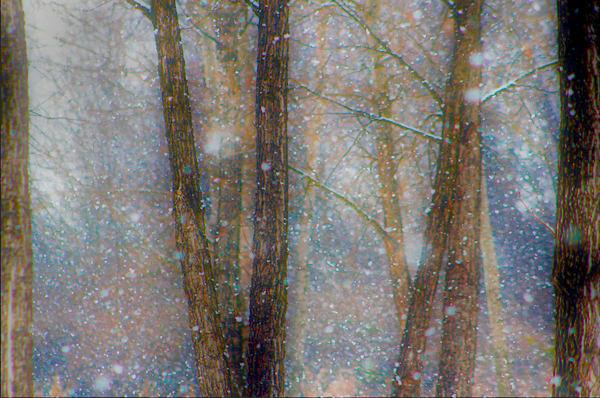 Winterland Art | Cincy Artwork