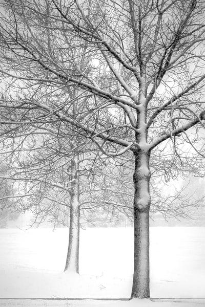 Trees In Snow Art | Cincy Artwork