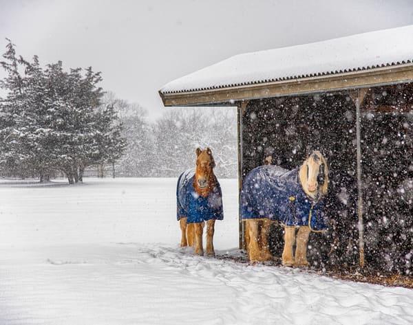 Misty Meadows Snow Ponies Art | Michael Blanchard Inspirational Photography - Crossroads Gallery