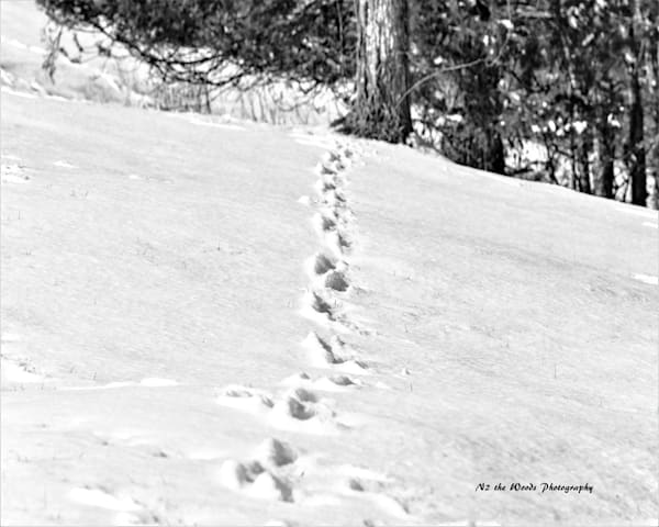 Tracks Photography Art | N2 the Woods Photography - Nature and Wildlife Artwork