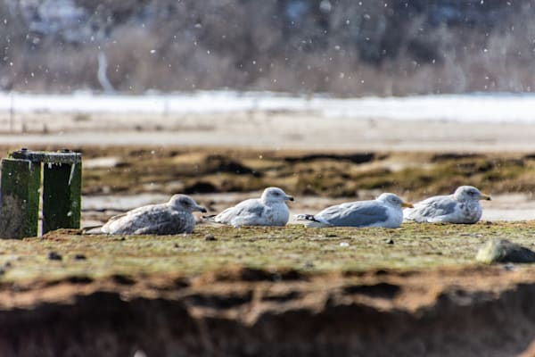 Four Feathered Friends Photography Art | The Colors of Chatham