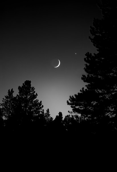 If You Love Trees Collection - bw   Crescent Moon and Trees, northern Colorado - bw. A beautiful evening moonrise over the pine trees in the clear mountain air.