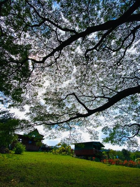 Tree Song Photography Art   Visionary Adventures, LLC