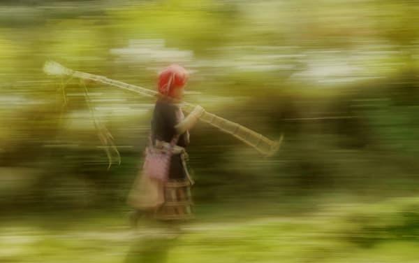 Sugar Cane Art | Danny Johananoff