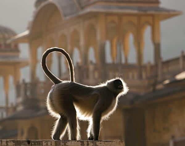 Shining Monkey Art | Danny Johananoff