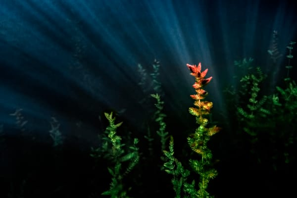 Under The Sea Photography Art | Trevor Pottelberg Photography