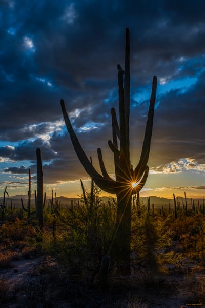 DP684 Winter Saguaro Sunset