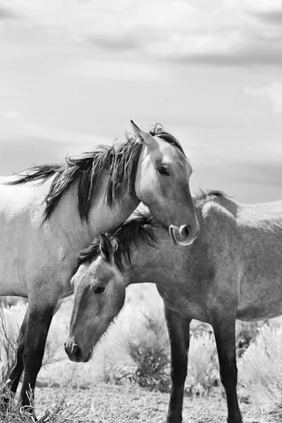 Bond Between Two Wild Horses