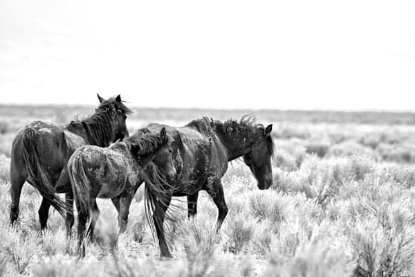Two mares and foal black and white print