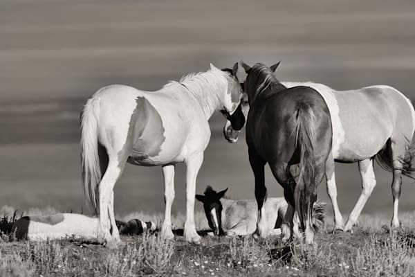 Wild Horse Family Bond