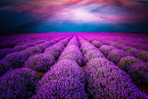 Provence Photography Art   Harv Greenberg Fine Art Photography