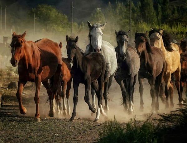 Horse Community Art | Danny Johananoff