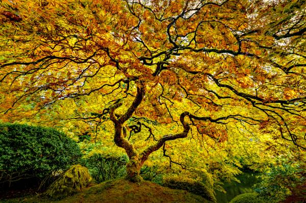Harv Greenberg Photography - Tree of Life