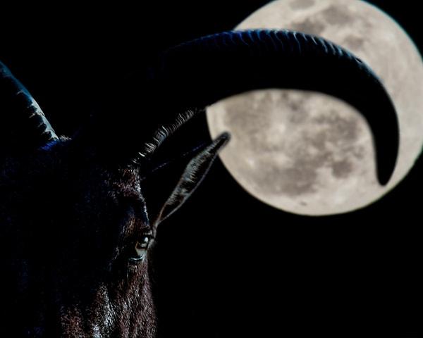 Hungry Moon Art | Jim Livingston Art