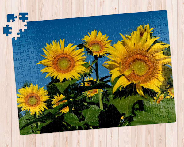 Sunflower Morning 300 pc. Puzzle