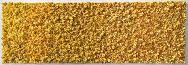 Garden Bonanza   Fc Jaune  Art   Lauren Naomi Fine Art