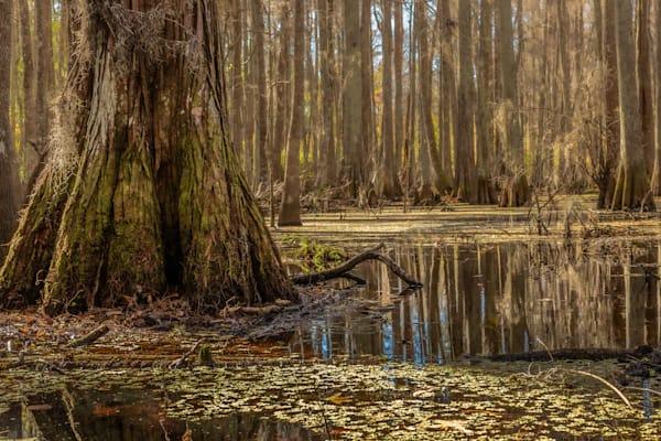 Prairie Creek Photography Art | Visions By Dan McCarthy