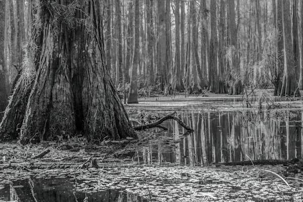 Prairie Creek Mono Photography Art   Visions By Dan McCarthy