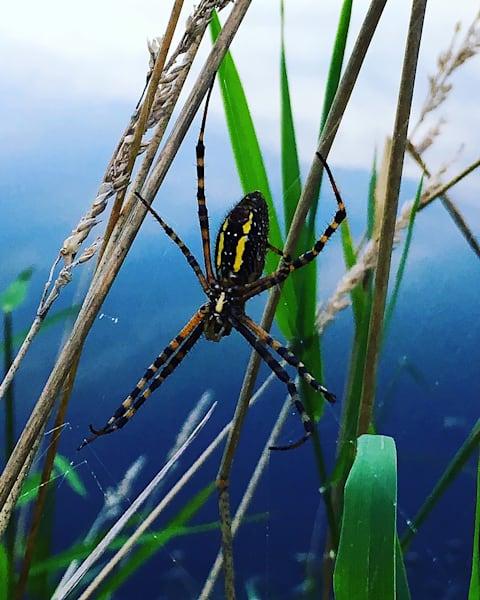 Ss Spider Art | Sunrise Galleries