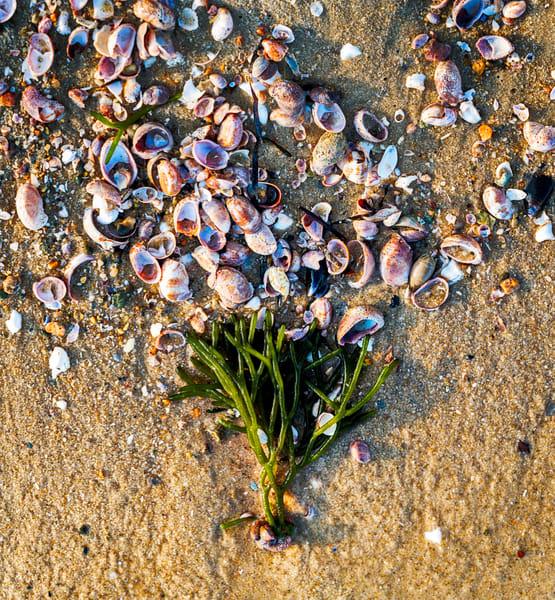 Tree Of Life Photography Art   Cerca Trova Photography