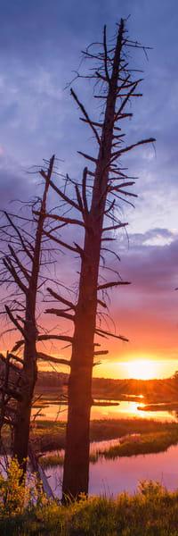 Moose River Old Pines Sunset Panoramic Photography Art | Kurt Gardner Photogarphy Gallery