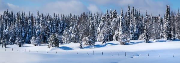 Winter Tug Hill Frozen Trees Panoramic Photography Art | Kurt Gardner Photogarphy Gallery
