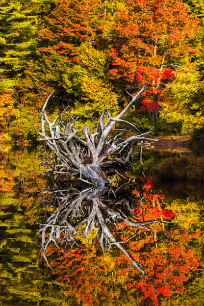 Moss Lake Fallen Tree Reflection Photography Art | Kurt Gardner Photogarphy Gallery