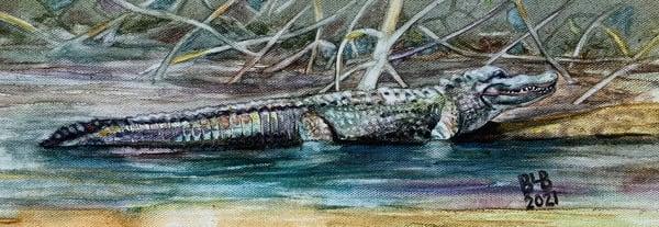 Afternoon Alligator Art | Blissful Bonita Art Studio & Gallery