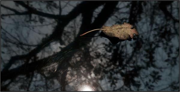 Winter Respite Photography Art   Ed Sancious - Stillness In Change