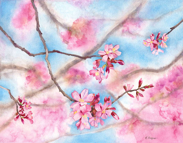 Early Spring    Dc Cherry Blossoms Art | Katherine Rodgers Fine Art