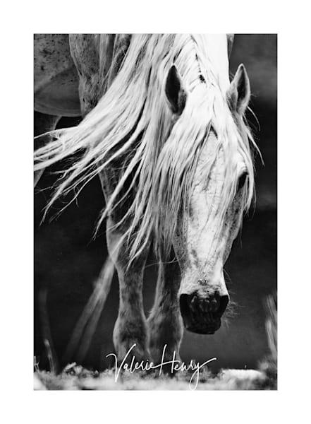 """Legends"" Limited Edition Photography Art | Koru Photo Designs"