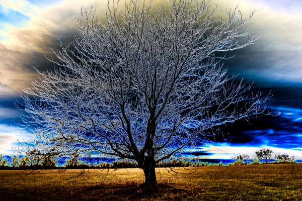 Kansas Tree Photography Art | Silver Spirit Photography