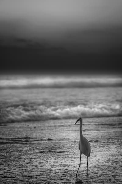 (Almost) Alone On The Beach. Sd Ca Usa Photography Art | Rinenbach Photography