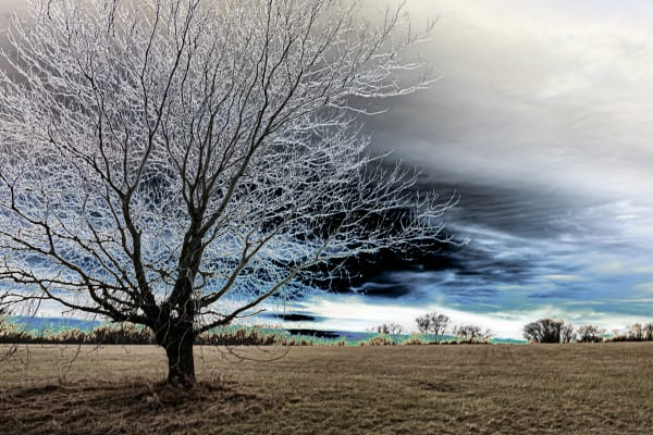 Kansas Tree Two Photography Art | Silver Spirit Photography