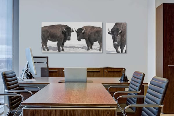 Bison Diptych Photography Art | Beth Sheridan, Grace Fine Art Photography