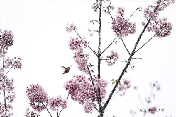 Hummingbird And Cherry Blossoms Photography Art | Mindy Fine Art Photography