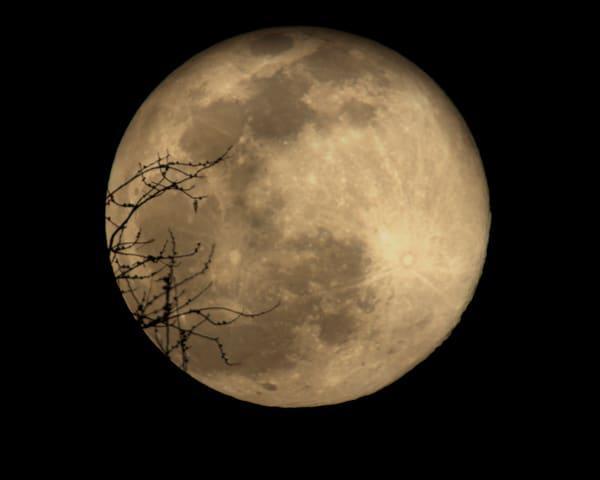 Reaching For The Moon Art | Jim Livingston Art
