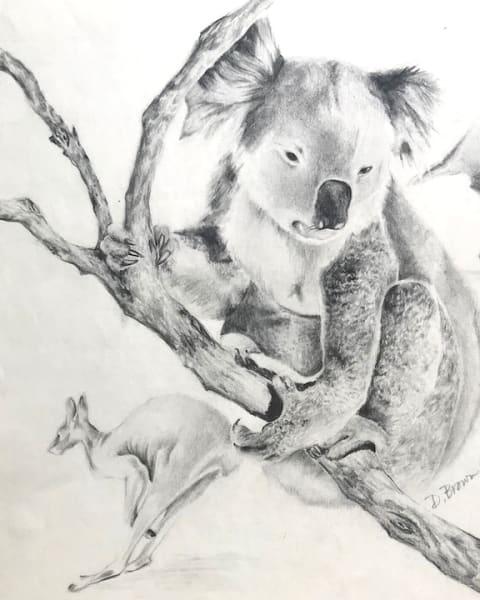 Pencil drawing of Koala