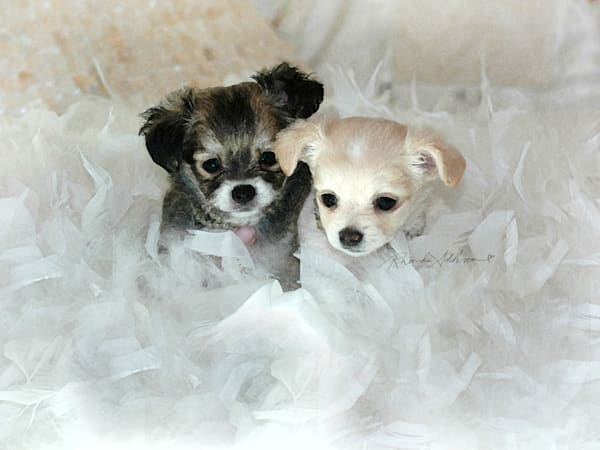 Puppies and Feathers Art