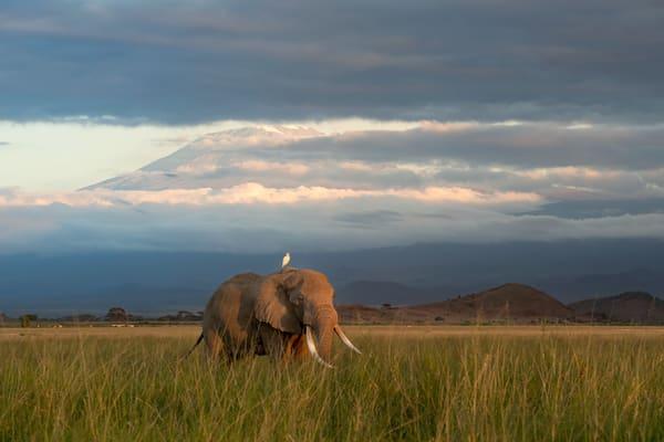 Wonderful elephant at Mt. Kilimanjaro fine art color print