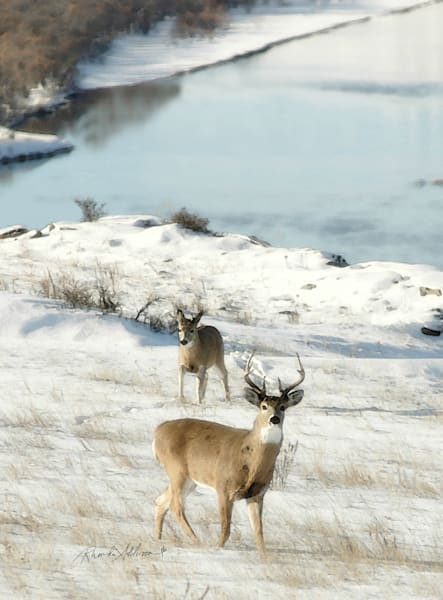 Deer in Snow Art