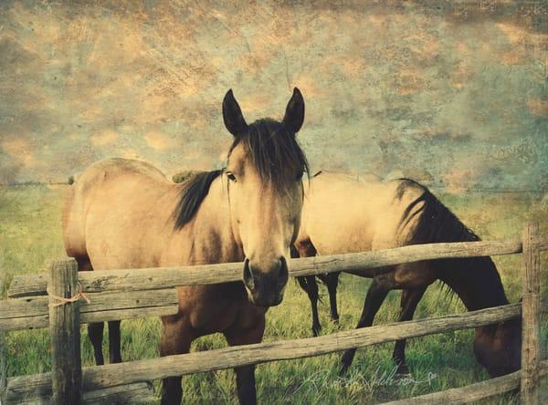 Buckskin Horses in Montana